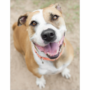 Austin Pets Alive! | Dogs Available For Adoption