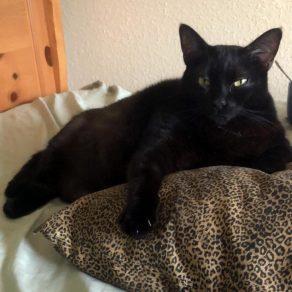 Austin Pets Alive! | Home