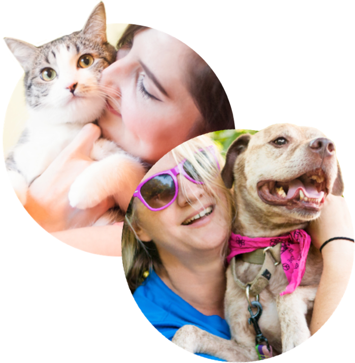 Dogs And Cats Img