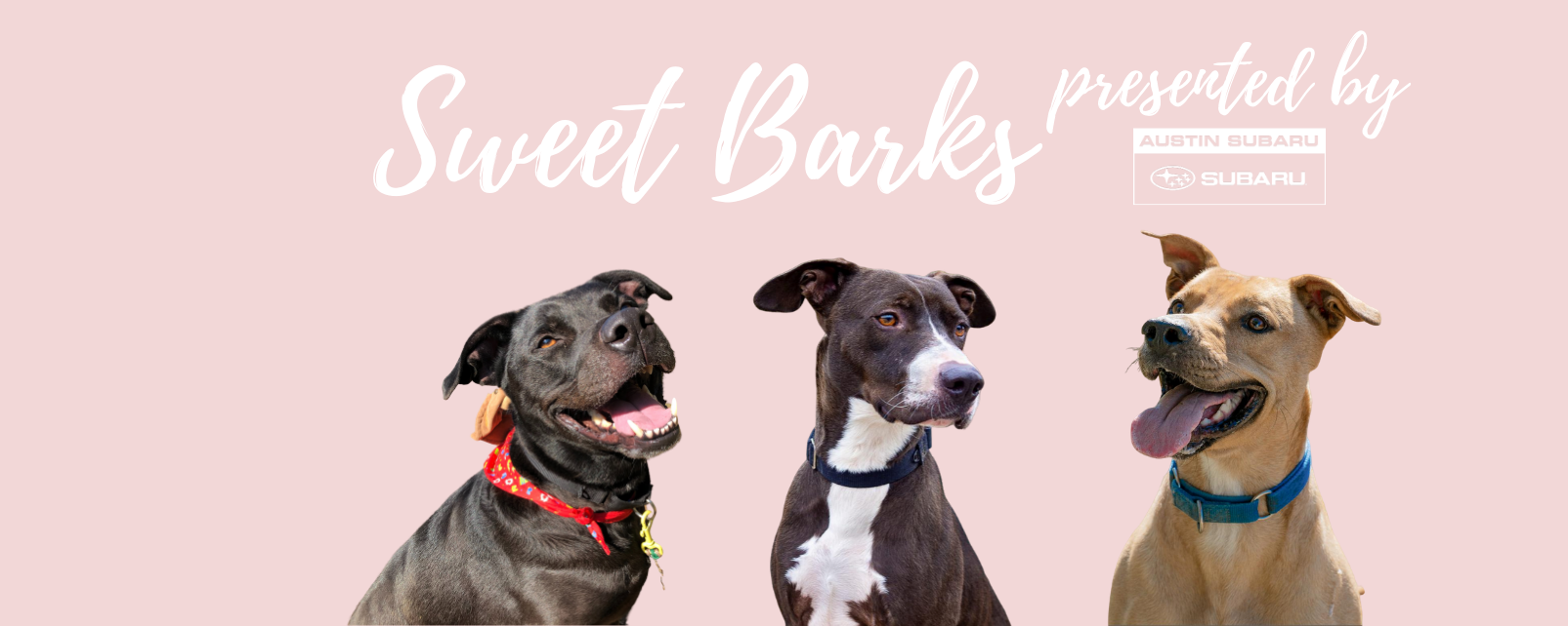 APA Sweet Barks Homepage