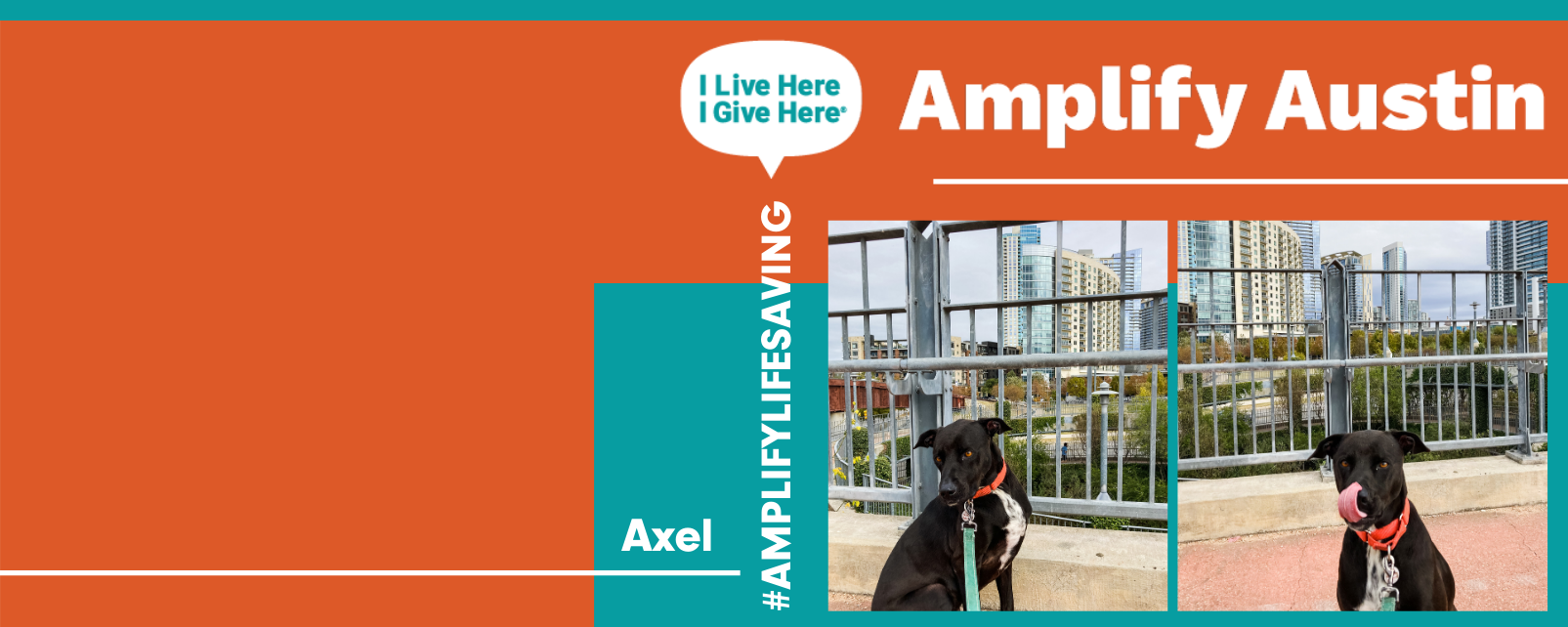 Amplify 2021 Web Banners 1