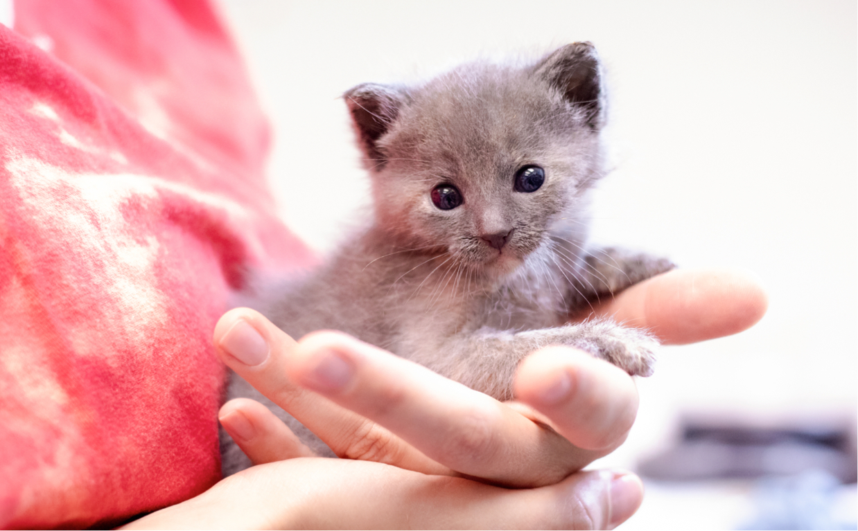 Neonatal Kitten Program Banner