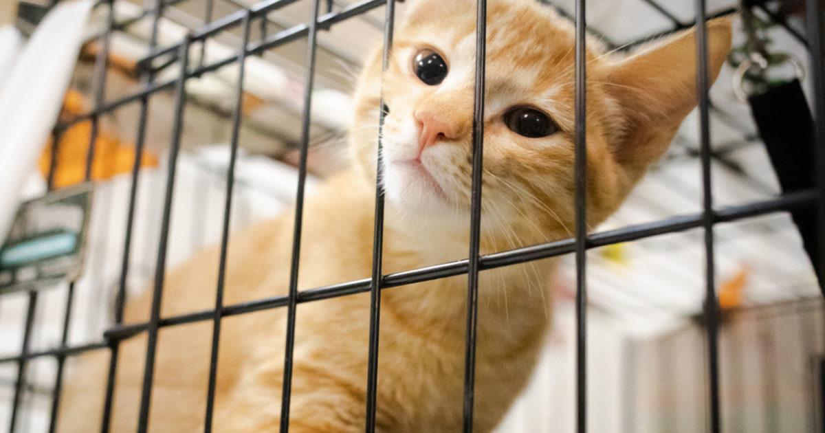 Austin Pets Alive Adopt