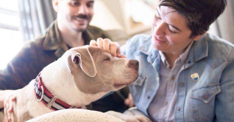 Austin Pets Alive! | FAQs