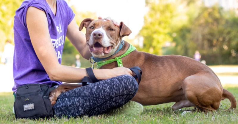 Austin Pets Alive!   Dogs Available For Adoption