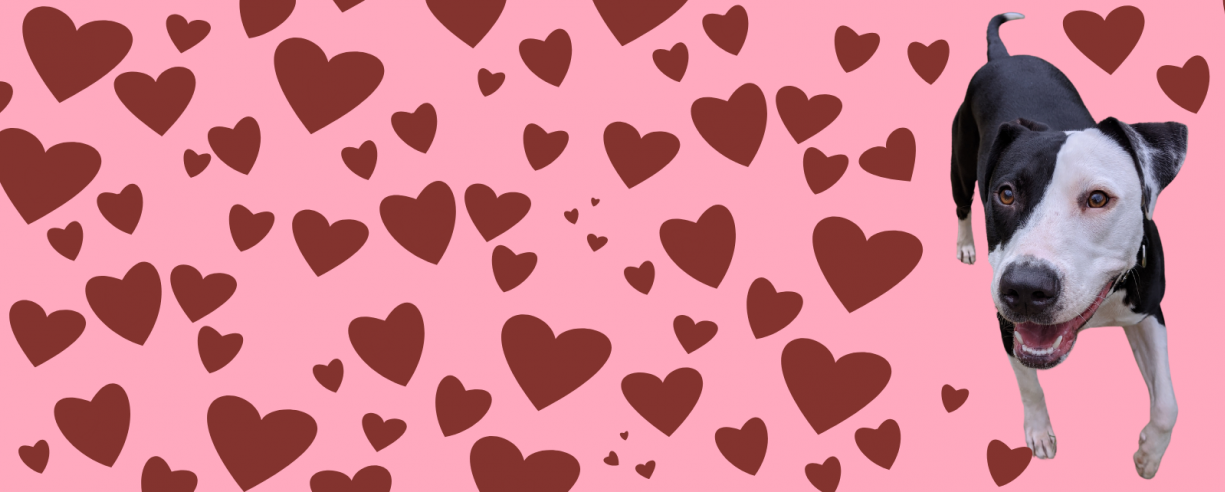 Palentines Run Website Header