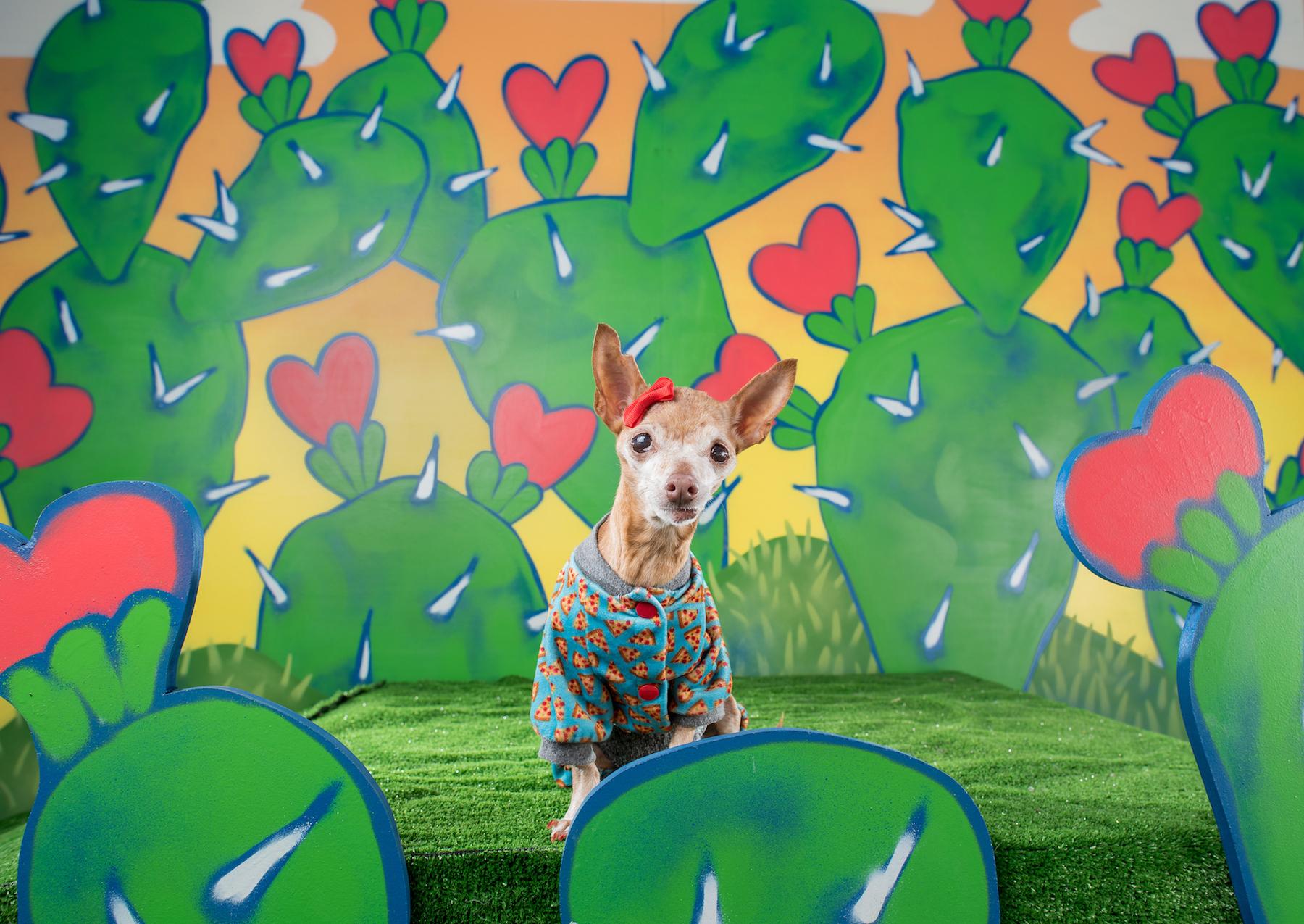 Sweet barks promo 42 2