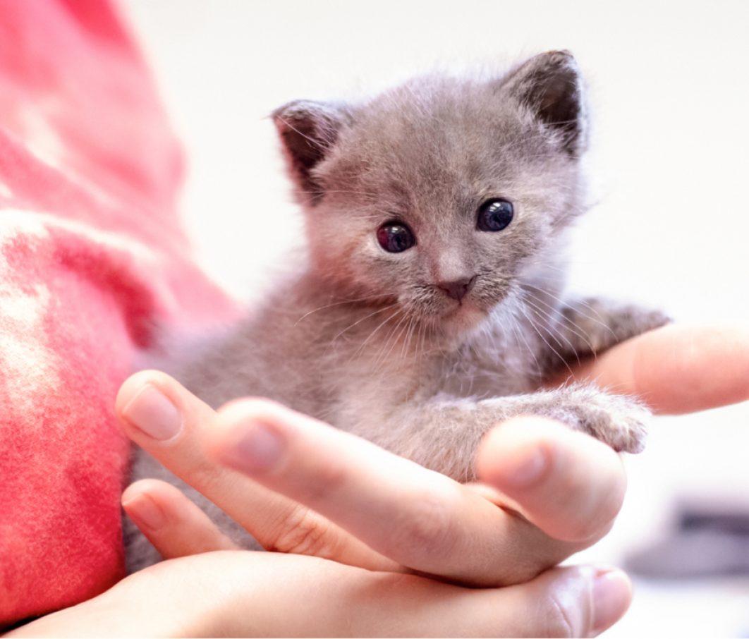 Neonatal kitten