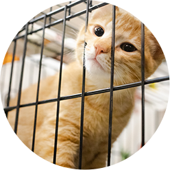 Openshelter Catfoster Icon