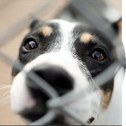 Savespace Dog