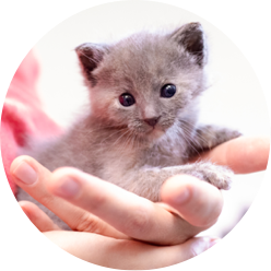 https://www.austinpetsalive.org/uploads/thumbnails/Neonatal-kitten_program_thumb.png