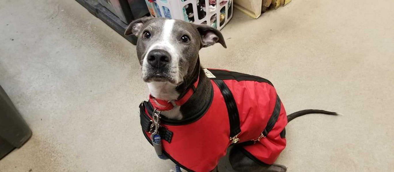Apa pup in coat