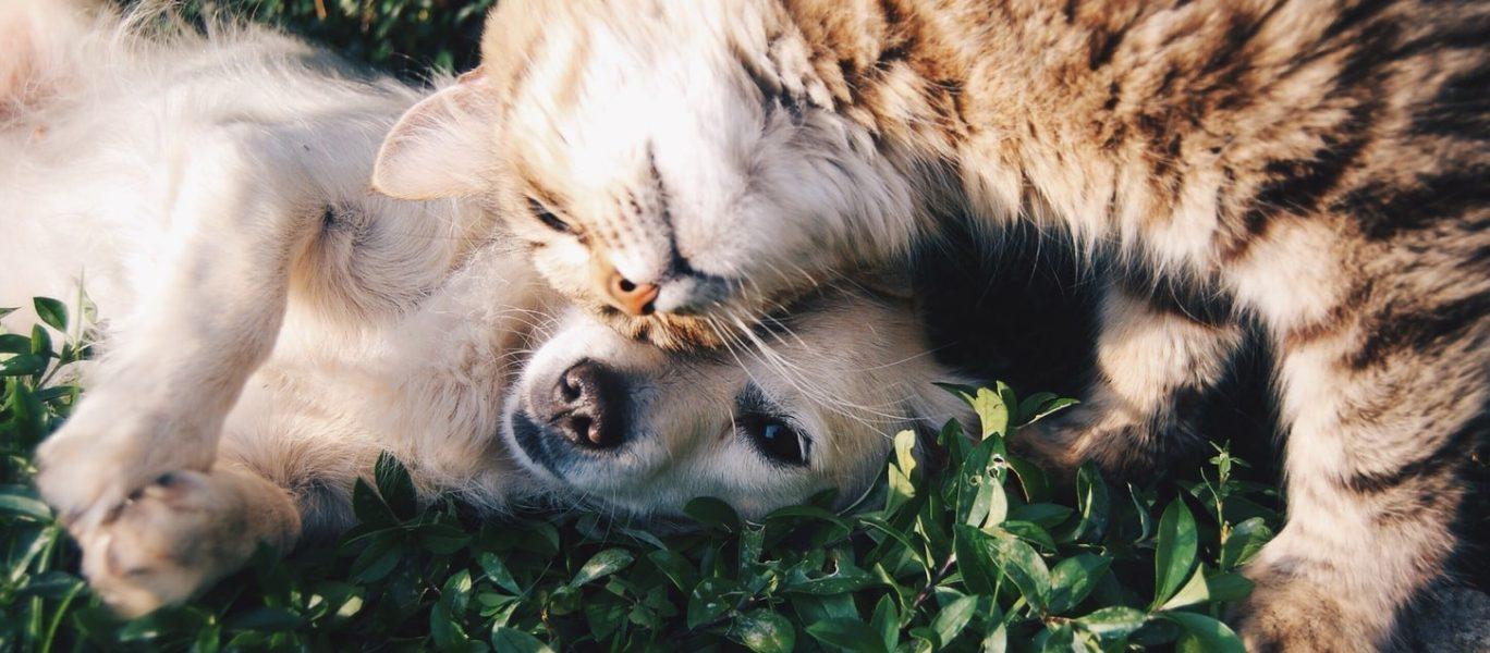 Cat-dog-friends
