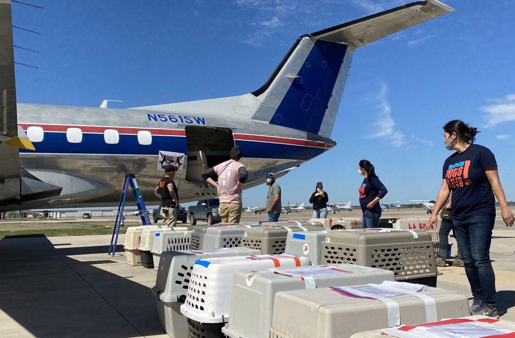 Florida plane transport cropped header