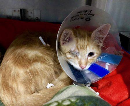 Kitten Update1