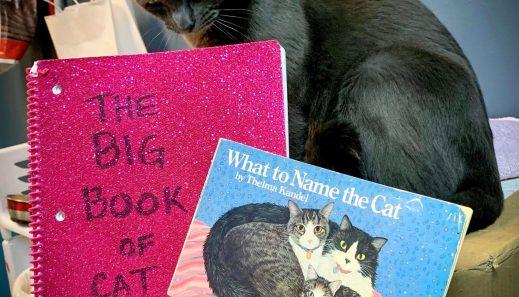 Cat-naming-vertical
