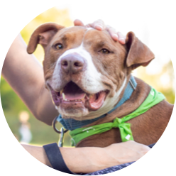 https://www.austinpetsalive.org/uploads/thumbnails/dog_program_thumb.png