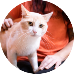 https://www.austinpetsalive.org/uploads/thumbnails/feline-leukemia_program_thumb.png