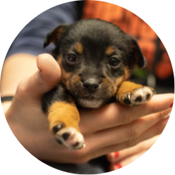 https://www.austinpetsalive.org/uploads/thumbnails/parvo-puppy-icu_program_thumb.png
