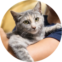 https://www.austinpetsalive.org/uploads/thumbnails/ringworm-adoption-center_program_thumb.png