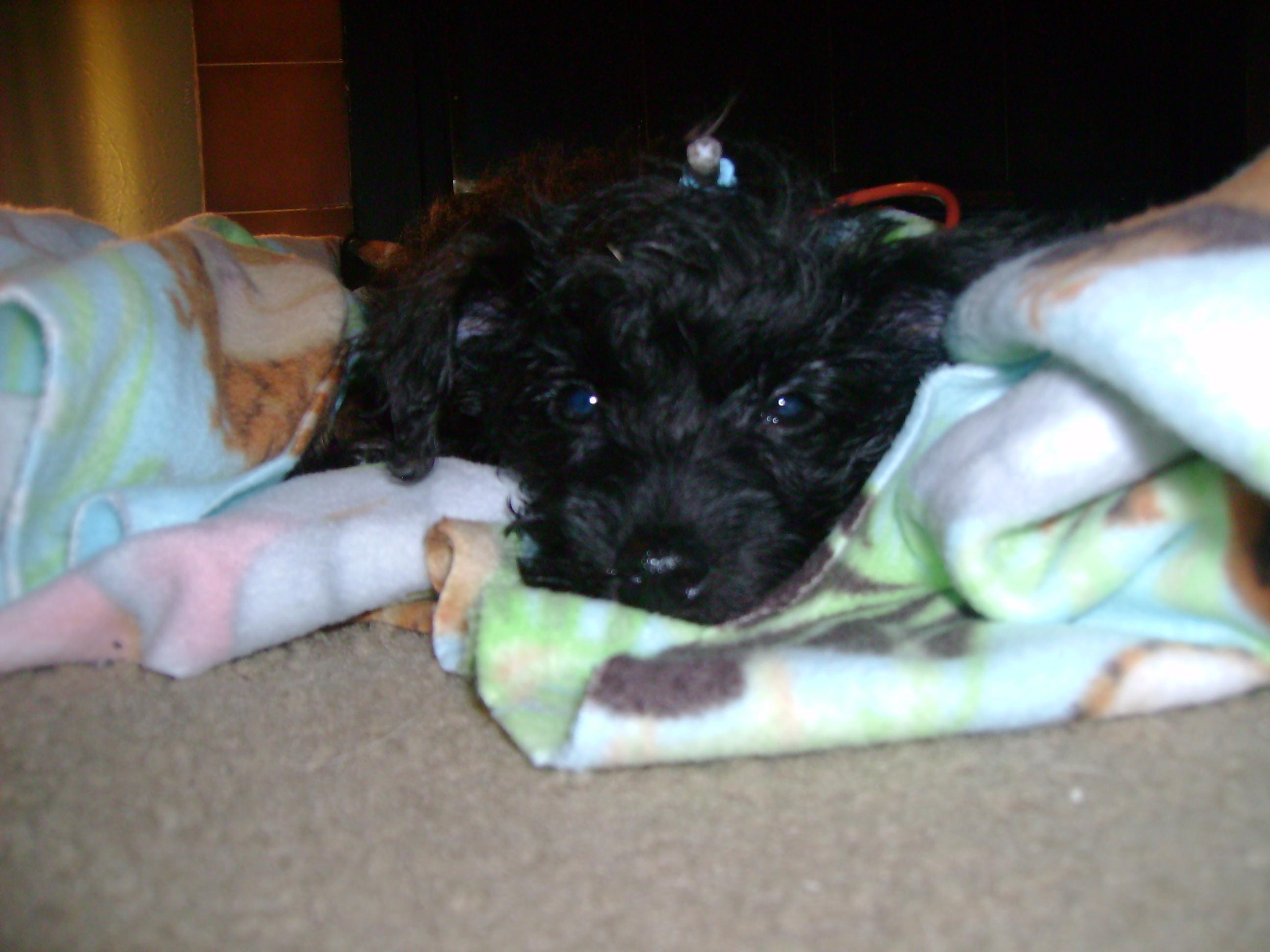 Austin Pets Alive! | Video Update of Phoenix