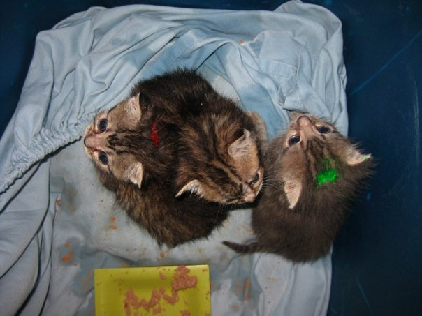 kittens3