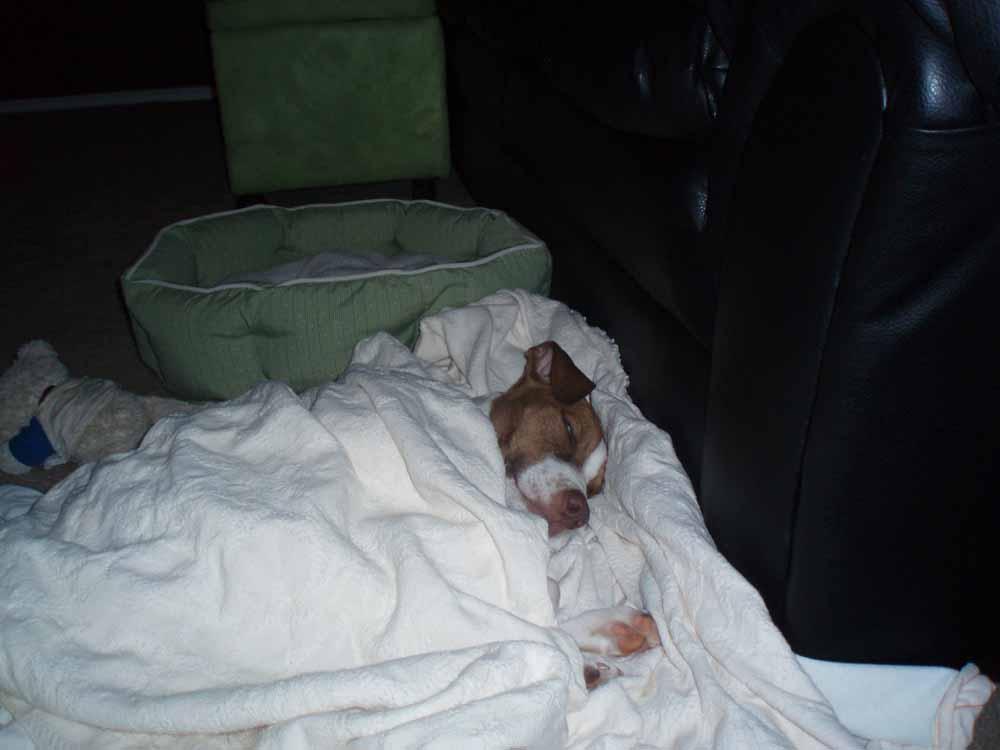 monty_in_blankets