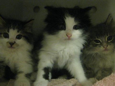 Super Cute Kitties