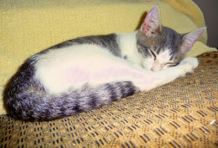 Marie the kitten