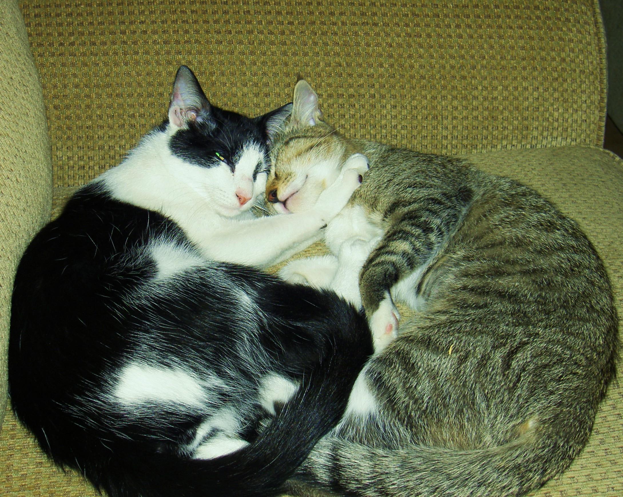 Minnie and Rocky