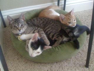 Ed (gray), Elliott (orange) and their new best friend, Bruiser (B&W)