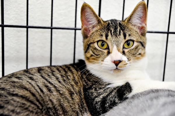 Ewok: adopted December 3rd