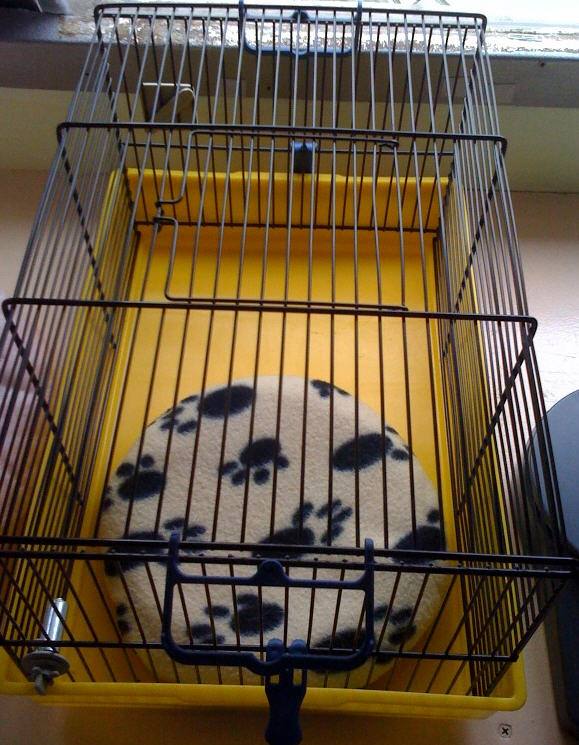 snuggle safe disc and hamster cage