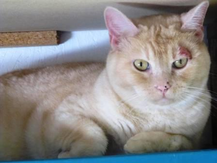 Ringworm Cat 2