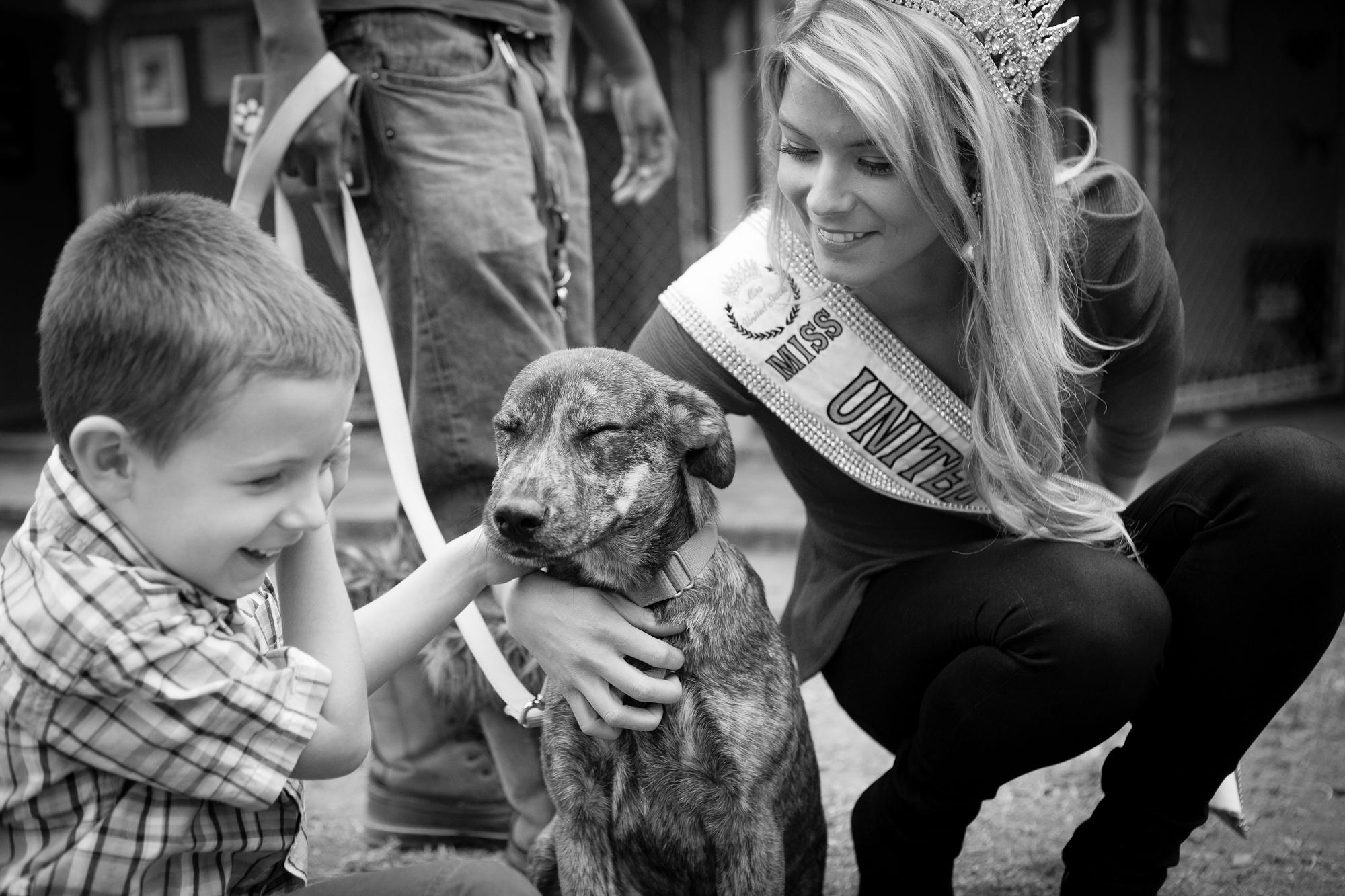 Cat Adoption Events December Austin