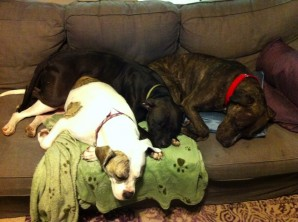 Adam, far right, becomes part of a sleepy dog pile.