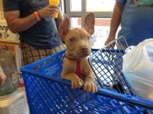 Benny shopping