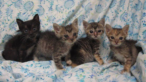 Austin Pets Alive Is Filled With Baby Kittens Right Now So We Have Added New Training Sessions For Volunteer Feeders In Our Bottle Kitten Nursery