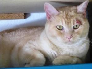 Ringworm-Cat