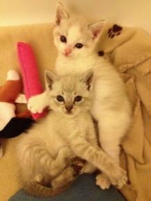 Tia and Tanto