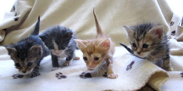 profender cat dewormer