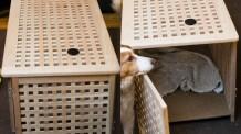 Animal Furniture Crate