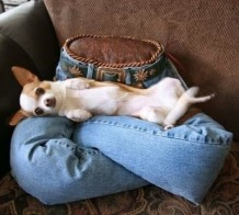 Animal Lap Sitter Solution