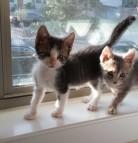 Godric & Gita