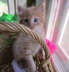 Zilker Kitten2