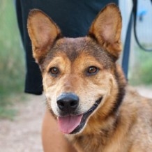 Lopez Cattle Dog Mix Needs A Home