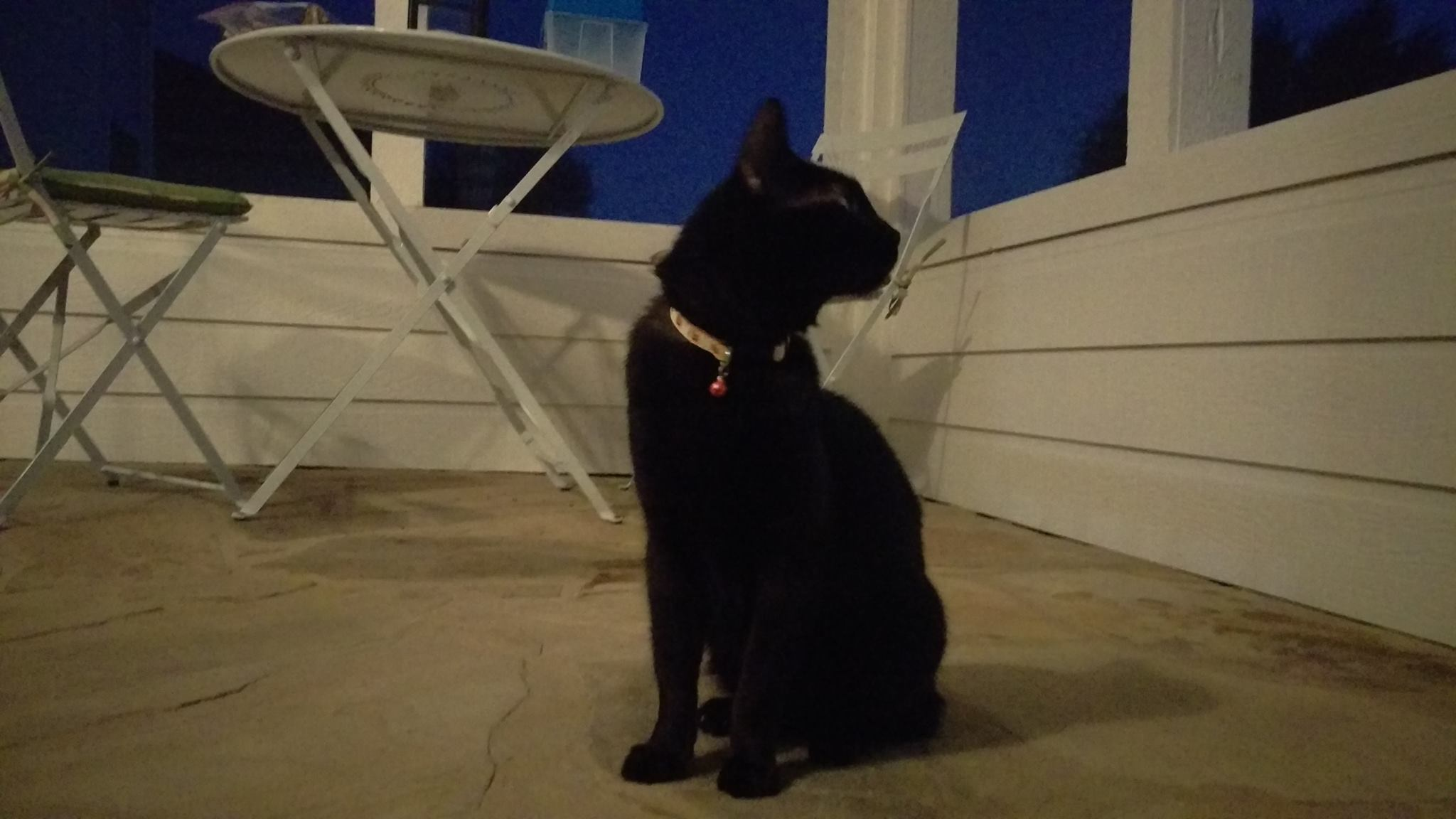 Neo in his new home on his own porch