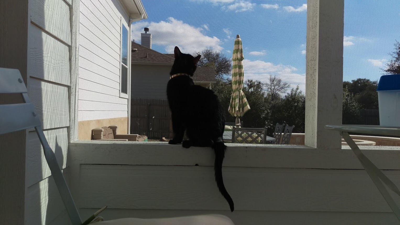 neo in his forever home screened in porch