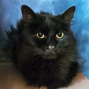 austin pets alive lives worth saving cats in renal failure austin pets alive. Black Bedroom Furniture Sets. Home Design Ideas
