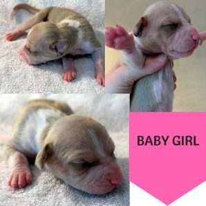 Copy of Puppy #1Female